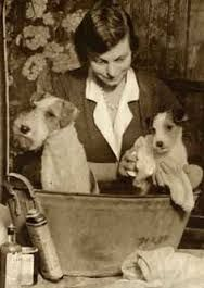 Image result for vintage dog grooming grooming pinterest grooming the wire haired fox terrier coleccin rosa banderas solutioingenieria Image collections