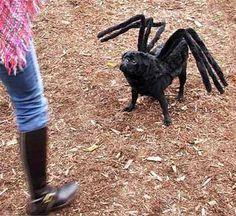 Funny Costumes Ideas: Funny Costume ideas - funny dog Black spider costume