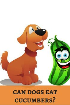 A cooling treat for summer is cucumber. Shall we cool our dogs too? Stay cool! http://dogbabe.com/can-dogs-eat-cucumbers