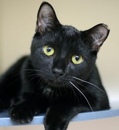 Unfortunately, the truth is kinda scary, too: Year-round, black cats are the least likely to get adopted in shelters across the U.S. In fact, black animals in general take more time to find homes, says Gail Buchwald, Senior Vice President of the Adoption Center.