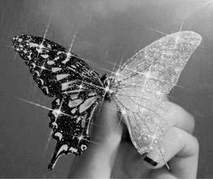 Butterfly Black And White, Black And White Picture Wall, Black And White Posters, Black And White Wallpaper, Black Aesthetic Wallpaper, Black And White Aesthetic, Dark Wallpaper, Photo Black, Black And White Pictures