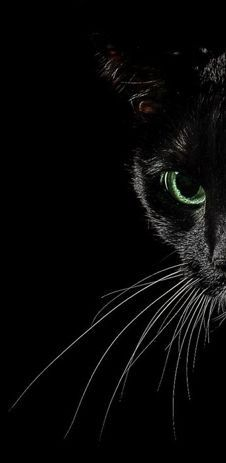 Black Cat Whiskas