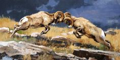 """""""Thunder Clap"""" 15 x 30 Oil Elk Pictures, Sheep Paintings, Big Horn Sheep, Sheep Art, Hunting Art, Western Landscape, Wildlife Art, Nature Animals, Lion Sculpture"""