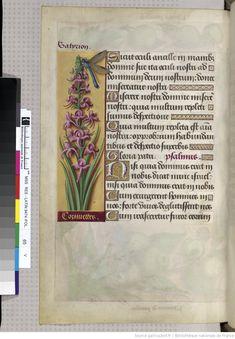 http://gallica.bnf.fr/ark:/12148/btv1b52500984v/f139.item