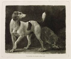 A Foxhound by George Stubbs (1724-1806, England)♥♥♥