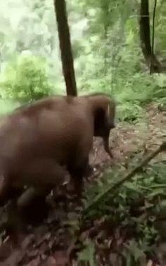 This elephant having some fun
