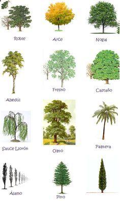 Tipos de arboles y sus nombres buscar con google for Plantas que hay en un vivero