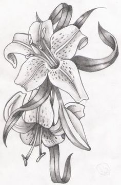 lily flowers drawings | Flowers - Madonna Lily by syris-darkness ...