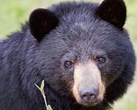 More signatres!!!!! And write please SEVEN (and counting) WILD BEARS KILLED BY FLORIDA FISH & WILDLIFE OFFICERS