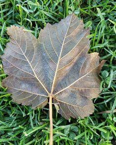 Lush Lush, Plant Leaves, Tumblr, Plants, Planters, Plant, Planting