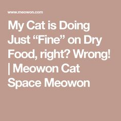 """My Cat is Doing Just """"Fine"""" on Dry Food, right? Wrong!   Meowon Cat Space Meowon"""