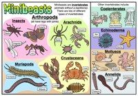 Types of Minibeasts - Full Poster