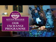 Ep.4 Kitten Kollege: Our Exchange Programme