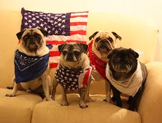 Happy Fourth of July from Benjamin, Henry, Luna & Sol-Owned by Pugs