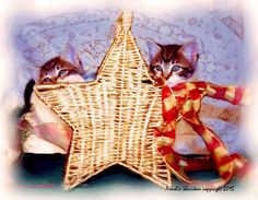 STAR KITTENS   This is a work of digital art and uses Painter and Photoshop features to give these kittens the appearance  of an oil. by WINDFLOWERDIGITALART on Etsy
