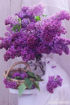 So ready to bring this vibrant bouquet & sweet scent into my home! Purple Love, Purple Lilac, All Things Purple, Beautiful Flower Arrangements, Floral Arrangements, Lilac Flowers, Beautiful Flowers, Exotic Flowers, Flowers Garden