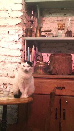 Grumpy cat, Istanbul.