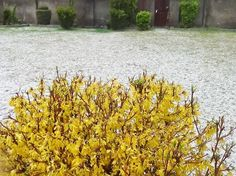 A view of heavy hailstorm in Shopian town on Sunday.   -Excelsior/Younis Khaliq