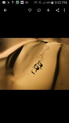 , camels from the air