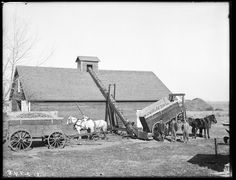 "Lowe unloading corn into a crib ""according to improved methods,"" south of Kearney, Nebraska. Agriculture, Farm Pictures, Farm Images, Old Photos, Vintage Photos, Old Tractors, Farmall Tractors, Old Farm Equipment, Vintage Farm"