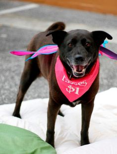 Barkie - URGENT - WALTON COUNTY ANIMAL SHELTER in Defuniak Springs, FL - ADOPT OR FOSTER - Senior Spayed Female Lab/Chow Chow Mix