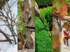 Beskärning av trädgårdsväxter året runt
