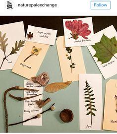 Nature Pal Exchange ideas