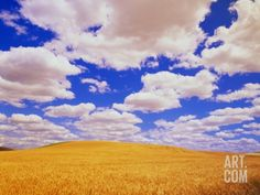 White Clouds Over Wheat Field Photographic Print by Darrell Gulin at Art.com