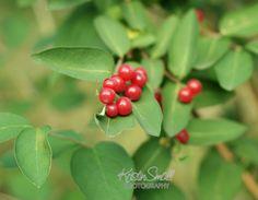 Wild Berries. NH, Summer 2010 | Flickr - Photo Sharing!