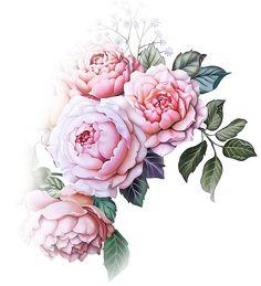Art Watercolor, Watercolor Flowers, Botanical Flowers, Botanical Prints, Flowers Wallpaper, Poster Photo, Flower Art Images, Vintage Drawing, Flower Clipart