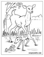 Printable coloring page for the kids of a Yosemite deer :)