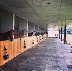 Nacho Figueras's stable