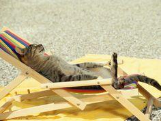 summer photos wallpaper   Summer Cat Nap36 - Photography   Images, Wallpaper & Ecard