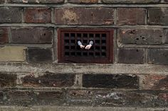 miniature sculpture: The tenant by Isaac Cordal