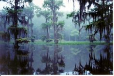 Caddo Lake Texas ... The only natural lake in Texas .. canoed it and camped it.. very beautiful .. got to get back