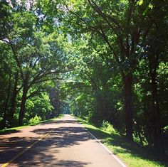 Summer shade and lush greenery on the Natchez Trace in Natchez, MS. Natchez Trace, Spring Time, Lush, Greenery, Hiking, Bloom, Country Roads, Shades, Summer