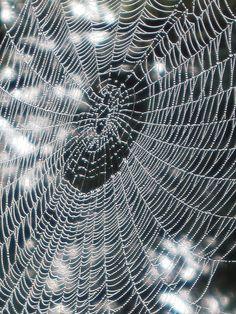 The spiderweb. God art.