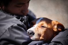 Inmate-trained dogs give veterans some love