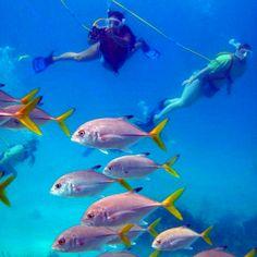 Snuba- grace bay. Turks and Caicos