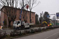 A S.Cesario sul Panaro abbattuti 12 alberi ammalati sulla sp 14