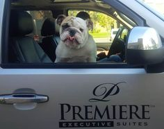 Premiere Suites is Canada's largest and most trusted provider of furnished, short-term rental homes. Executive Suites, Vacation, Dogs, Animals, Vacations, Animaux, Doggies, Animal, Animales