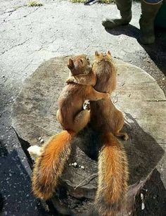 This squirrel has had more dates than you.