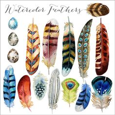 Watercolor Feathers Clipart: Instant download hand painted clip art