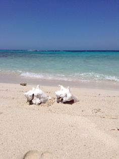 Shells and Beach. Just an amazing view from Cayos Cochinos