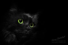 The Eyes of Jayde by Gary Randall on 500px