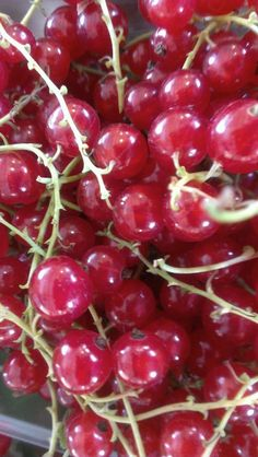 Red currants from Appleberry Farm. Use in jams, jellies, or as the Dutch man next to me suggested, salads.