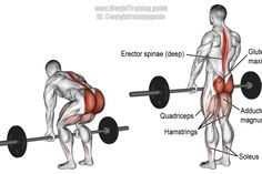 A major compound exercise! Target muscles: Gluteus Maximus and Erector Spinae. Synergists: Quadriceps Hamstrings Adductor Magnus Soleus Latissimus Dorsi Wrist Flexors (the latter two only if you lift heavy). Numerous other muscles t Good Back Workouts, Back Exercises, Gym Workouts, Training Workouts, Workout Fitness, Fitness Motivation, Back Workout Program, Workout Programs, Barbell Deadlift