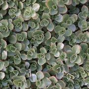 Full Sun & Ground Cover Plants   eHow