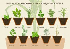 Herb Garden Cheat Sheet Makes Growing Herbs Extremely Easy Burpee Seeds, Herbs For Health, Home Vegetable Garden, Herbs Indoors, Farm Gardens, Growing Herbs, Edible Garden, Kraut, Gardening Tips