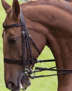 #SidesaddleClass #PenistoneAgriculturalShow #horse #equestrian #doublebridle #chestnut #Yorkshire #AandPBikePhoto